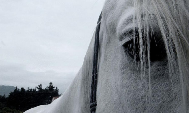 actualite-parler-aux-chevaux