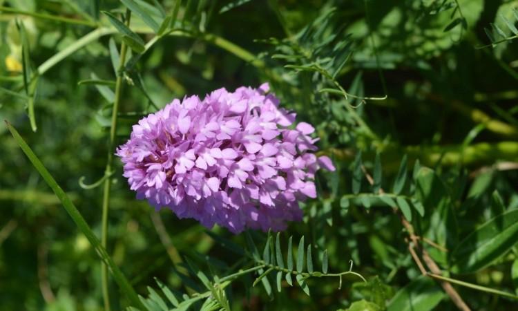 Photo fleurs